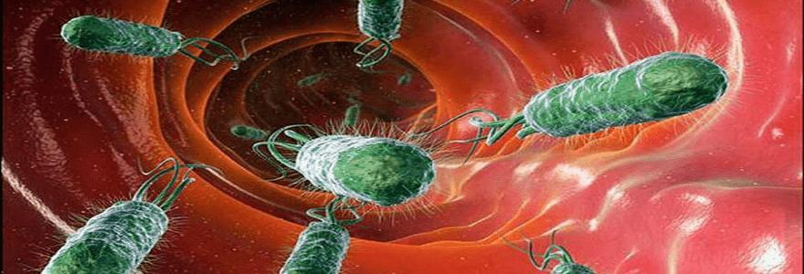 лечение-дисбактериоза