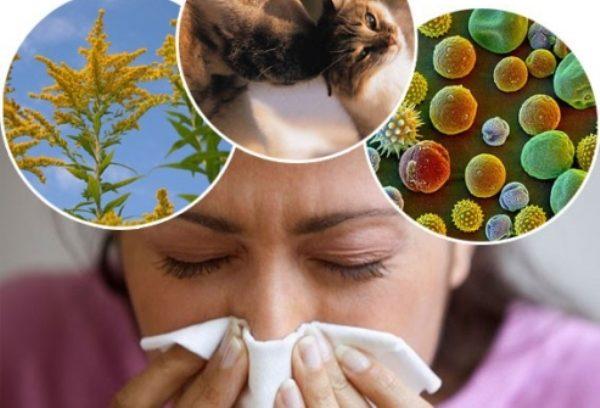 аллергия лечение