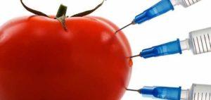продукты ГМО