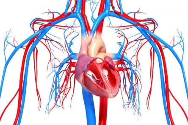диагностика-сердечно-сосудистой-системы